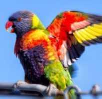 У попугая отвалился хвост