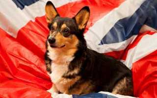 Английские породы собак с фотографиями