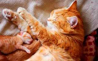 Когда новорожденные котята открывают глаза