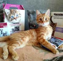 Проплан влажный корм для кошек