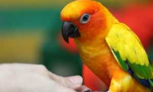 Аллергия на попугаев: симптомы и причины появления у взрослых и детей, возможность лечения