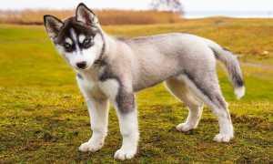 Почему собака лижет ноги, руки и лицо хозяина