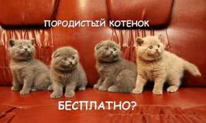 Кошки: как начать разводить, как стать заводчиком, плюсы и минусы разведения кошек