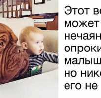 10 лучших пород собак для дома: для семей с детьми, семейные собаки