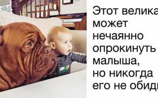 Сторожевые породы собак которые любят детей