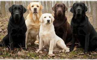Лучшие служебные породы собак