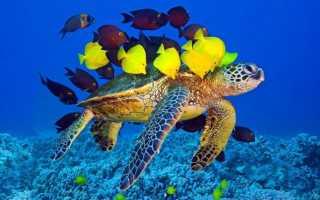 С кем можно держать красноухих черепах