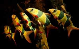 Рыба клоун уход