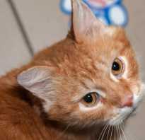 Уретростомия у кота: последствия и уход после операции