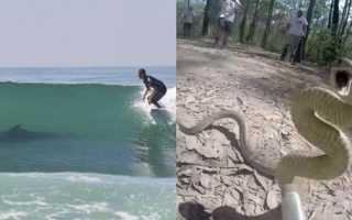 Змеи в австралии