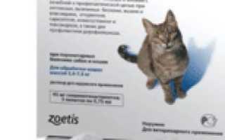 Стронгхолд для кошек и собак: инструкция по применению, дозировка