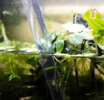 Параметры воды в аквариуме с рыбками