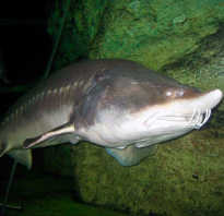 Сергей калуга март 41 год рыба