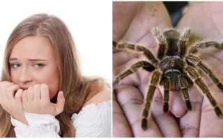 Как называют людей которые боятся пауков