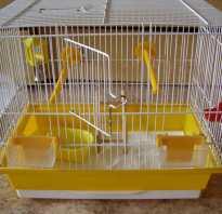 Дезинфекция клетки попугая