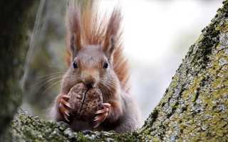 Можно ли белкам арахис не жаренный