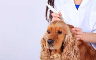 Глистогонное для щенков перед прививкой