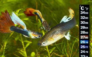 Температура для аквариумных рыбок