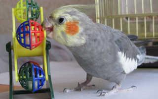 Игрушки для попугаев корелла своими руками