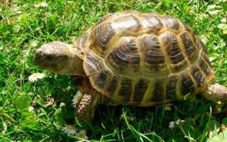 Где ищут пропавшую черепаху