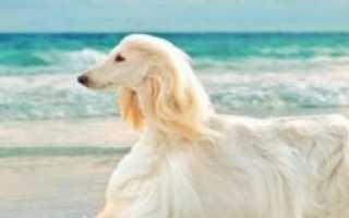 Порода собак с большой мордой