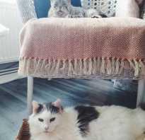 Как две ненужные никому кошки нашли новый дом