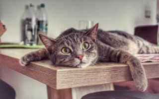 У кота понос что делать