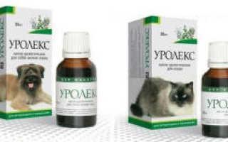 Уролекс для кошек: инструкция по применению капель