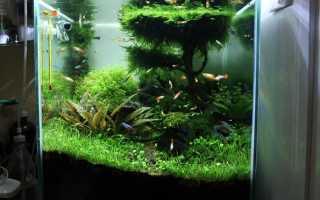 Дерево жизни в аквариуме!