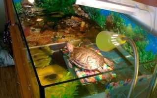 Какую лампу купить для черепахи