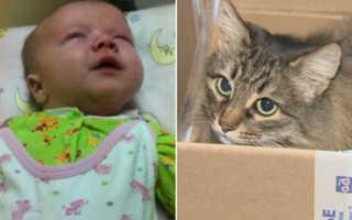 Девушка пришла в приют и попросила самого «неудачливого» кота