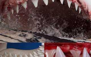 Зуб большой белой акулы