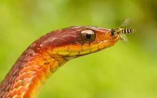 Как выглядят яйца змеи фото