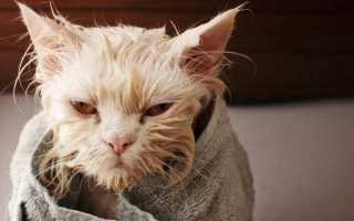 Как искупать кошку которая боится воды