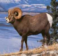 Необычное животное из красной книги россии