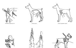 Понос водянистый у собаки в ростове