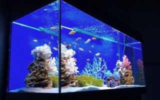 Можно ли выключать фильтр и аэрацию аквариума на ночь?