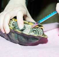 Как делать уколы красноухой черепахе