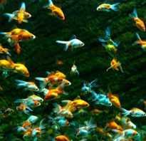 Как завести рыбок в аквариуме