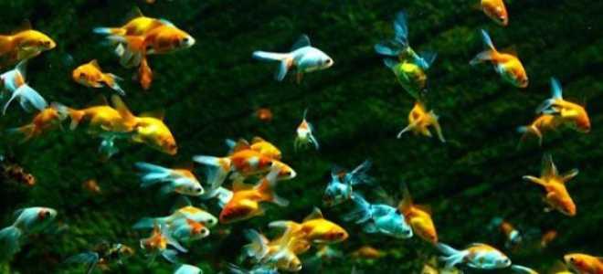 Первые шаги к красивому аквариуму