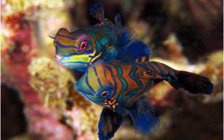 Тропические рыбки фото