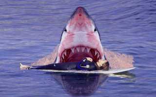 Люди и акулы