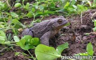 Лягушка в земле