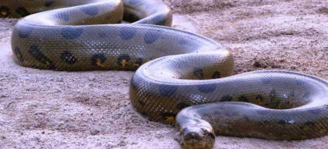 Самая большая змея жившая на земле