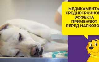 Таблетки для усыпления собак