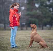 Дрессировка собак своими руками