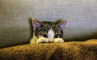 Как адаптировать кота или кошку к новому дому: котенок и немолодой