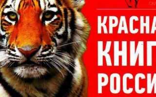 Плакат на тему красная книга россии