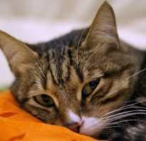 5 видов капель и народные средства от ушного клеща для кошек: симптомы и лечение в домашних условиях