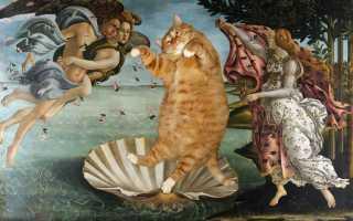 Рыжий котик Заратустра на видео с мировыми шедеврами живописи
